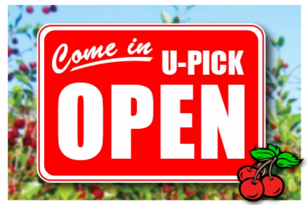 U-Pick Cherries - Orchard Open for 2016